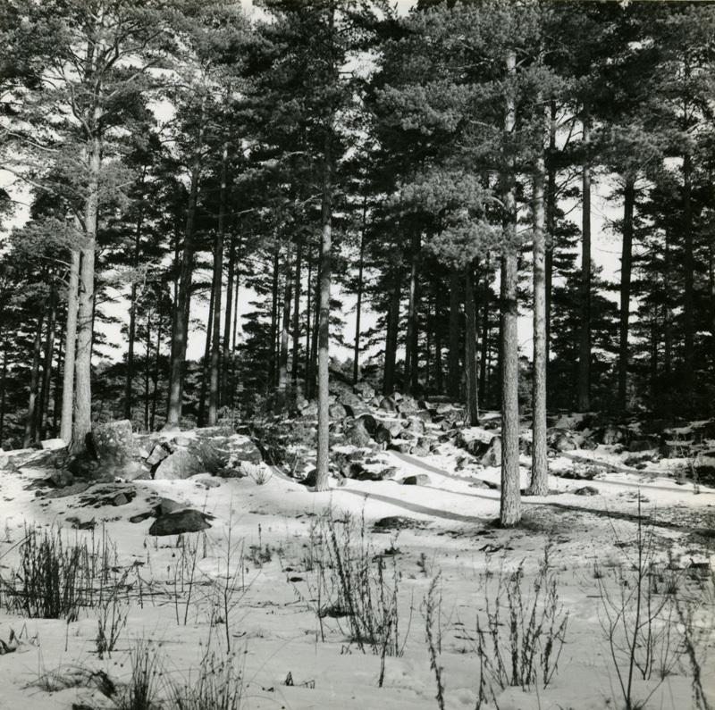 ESA_332-8.jpg